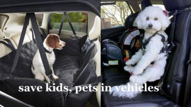 Save Kids, Pets In Vehicles