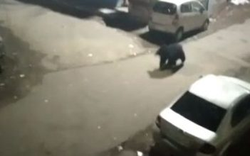 Attack On Forest Guard For Rescuing Sloth Bear