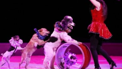 Ban Use Of Animals In Circuses To Prevent Spread Of Disease Peta
