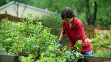 Online Sales Hint Home Gardening Blooms In Lockdown
