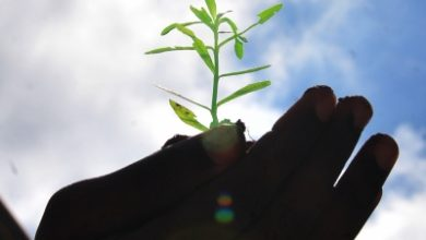 Up To Plant Trees With Religious Significance