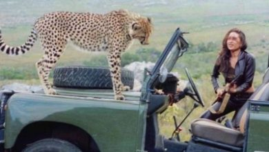 Photo of When Karisma Kapoor shared screen space with 'cheetah'