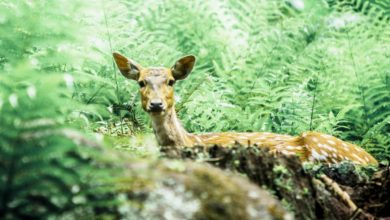 Forest Officers Rescue A Deer From Hotel In Bengaluru