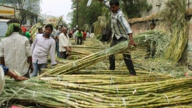 Photo of Cabinet okays hike in sugarcane FRP, to benefit 1 cr farmers