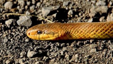 Snake Slithers Up Mans Jeans He Stands Still For 7 Hrs