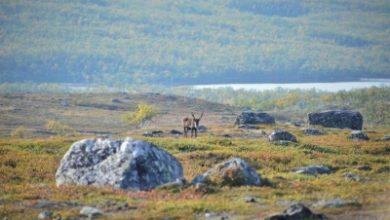 Arctic Gets Greener Due To Rising Temperature